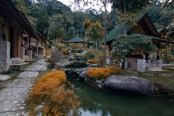 cuti-bamboo