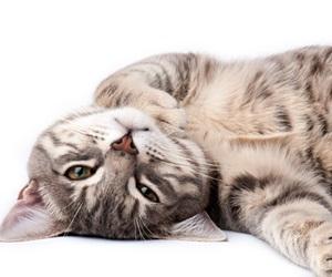 15 Fakta Kucing Yang Anda Tidak Tahu