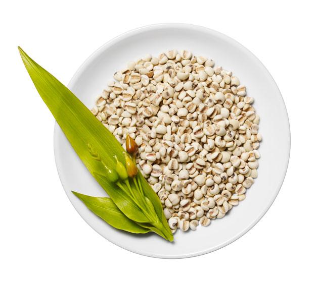 Coix-Seed