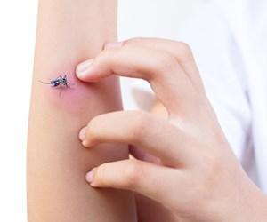 Tip Elak Jadi Mangsa Gigitan Nyamuk