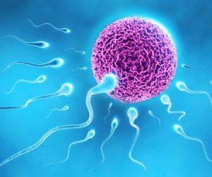 Enam Fakta Tentang Sperma Lelaki Yang Mungkin Anda Tak Tahu