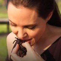 Angelina Jolie Goreng Tarantula Dan Kala Jengking Bersama Anak Di Kemboja