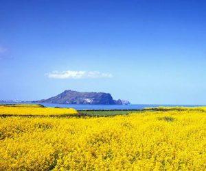 8 Lokasi 'Insta-Worthy' Wajib Kunjung Di Pulau Jeju