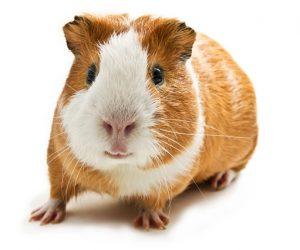 Jenis Haiwan Peliharaan Yang Paling Popular